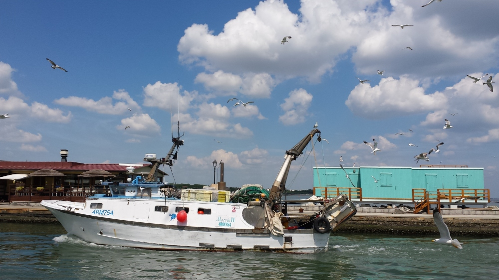 fishermen boat and seagulls