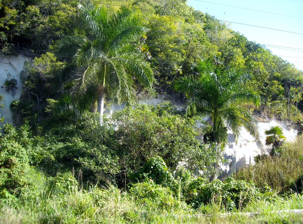 Cuba Jungles