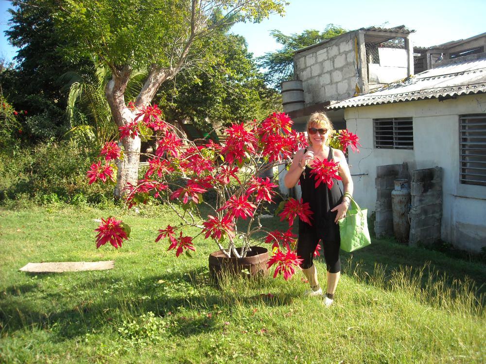 stella di Natale cresce a Cuba